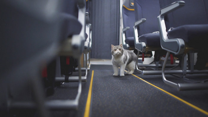 Catch launch Thomas Cook Airlines' new digital campaign #CatsOnAPlane
