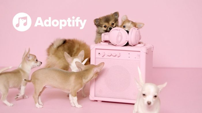 Spotify, Serviceplan and Tierschutzverein helps find you a shelter dog who shares your taste in music
