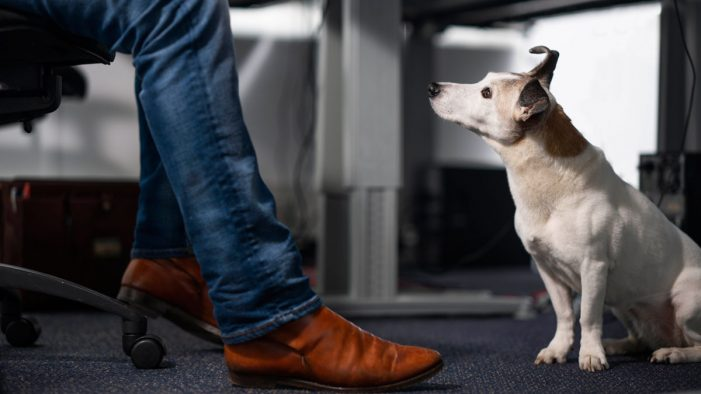 Menzis and DDB & Tribal Amsterdam match rescued dogs with employees to reduce their stress levels