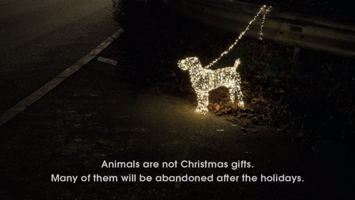 PETA proclaims 'Animals are Not Christmas Gifts' in new Serviceplan campaign