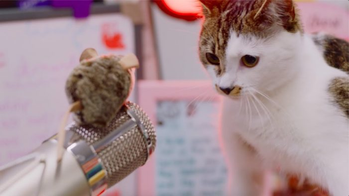 ANNA working with Taylor Herring to help find the 'Puurfect Miaow' for debit card