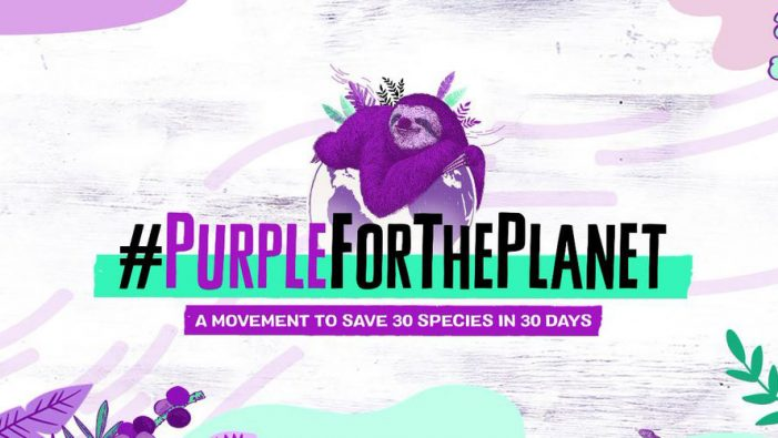 SAMBAZON launches second annual 'Purple for The Planet' campaign to save 30 endangered species in 20 days