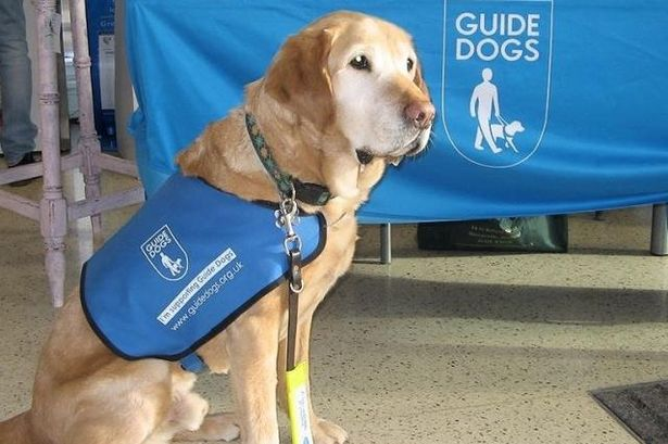 Medialab Group wins full media account for Guide Dogs