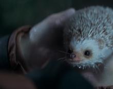 Freddie the Staatsloterij hedgehog wins Gouden Loeki 2019