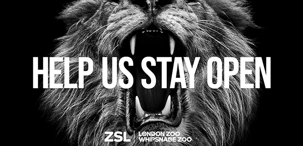 ZSL's marketing efforts to save their zoos fall to the animals in new campaign by Wunderman Thompson UK